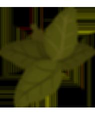 Foglia verde su bianco