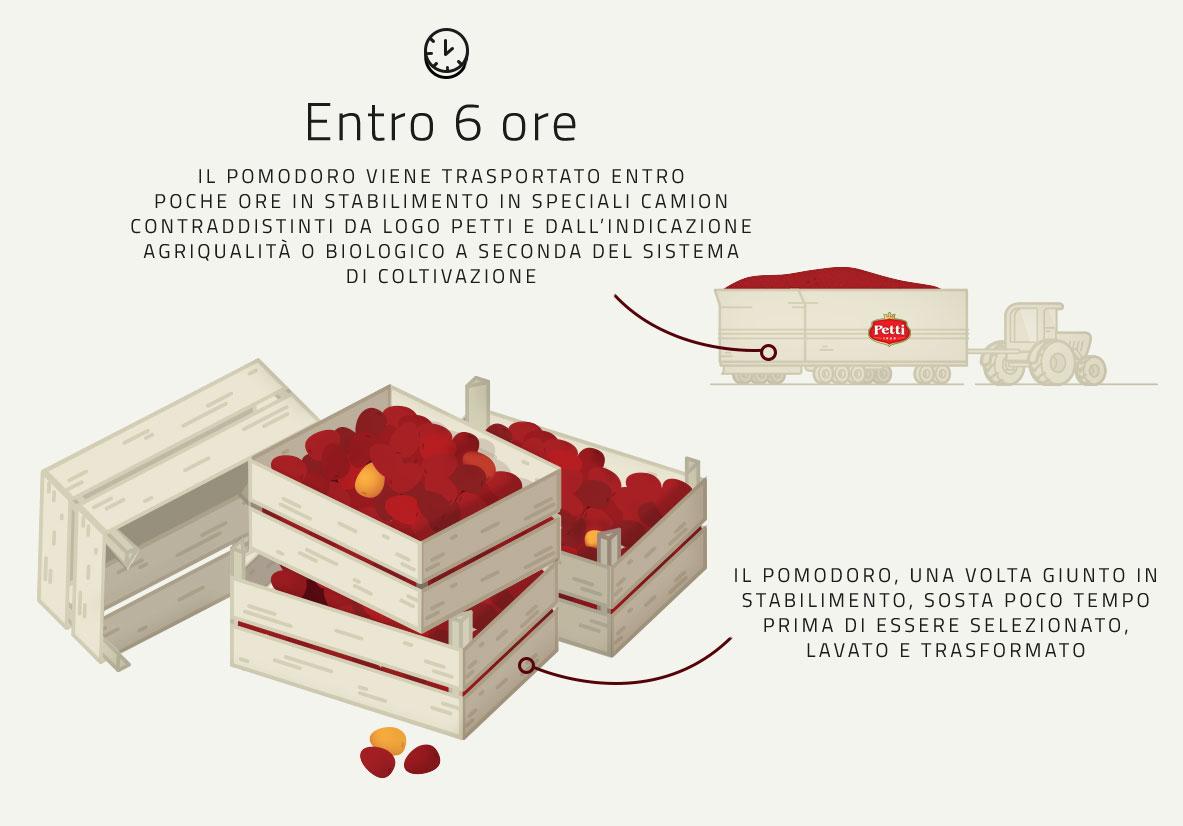 Infografica su Raccolta e Trasporto dei Pomodori usati per i prodotti Petti