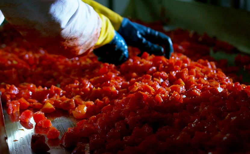 Dettaglio del piano di cernita manuale del pomodoro a cubetti dopo che è stato lavorato dalla macchina cubettatrice nello stabilimento dell'Italian Food S.p.A. - Petti